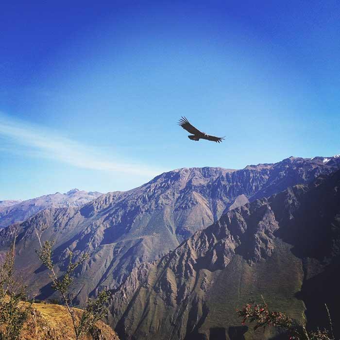 aigle oiseau ciel horizon