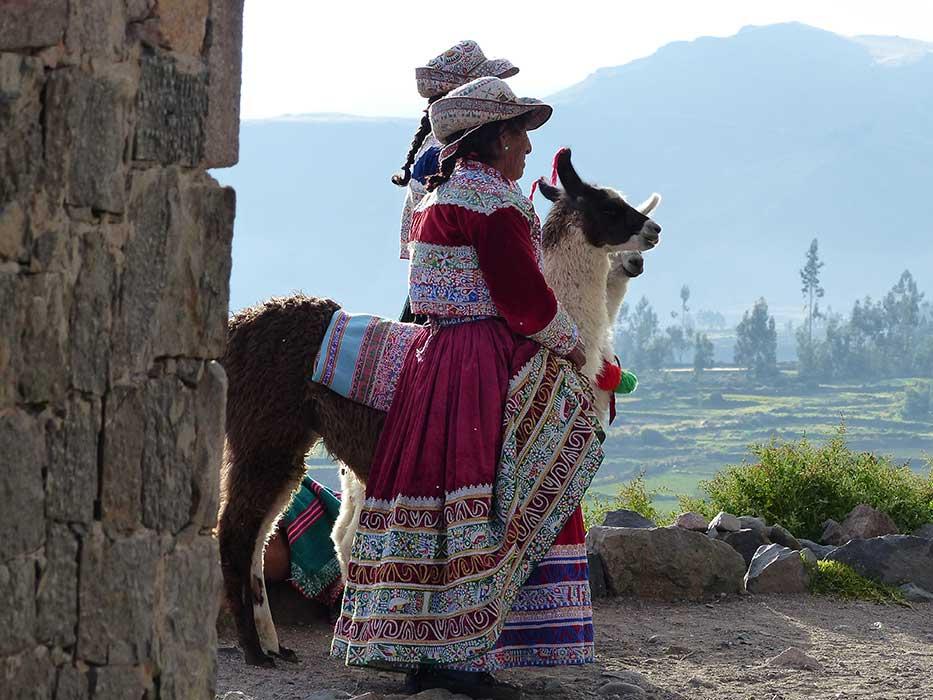 Pérou Lama