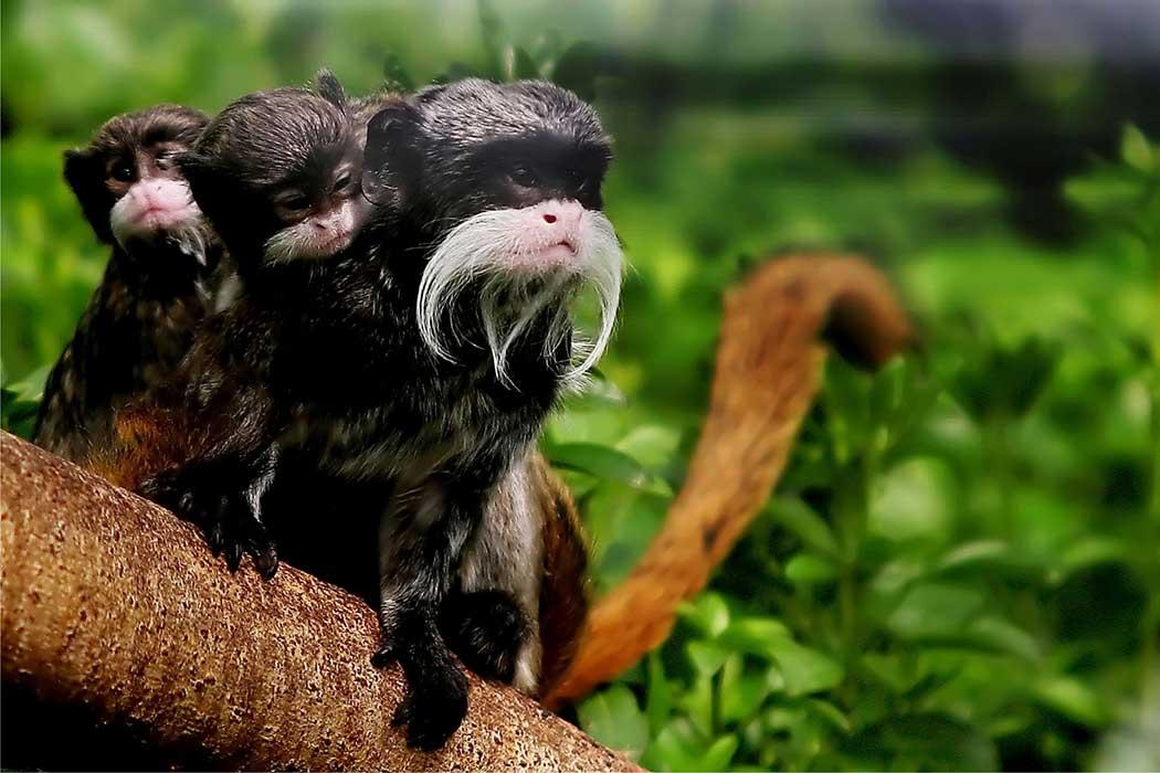 Amazonie forêt animal