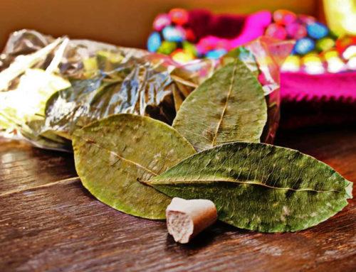 Les vertus inconnues de la feuille de coca